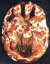 Apotheosis of an imperial Roman Couple. Camoe of sardonyx (Collection of C. Orghidan, a gift to Romania Academy)